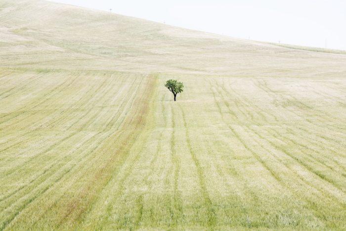 Italian landscape 01