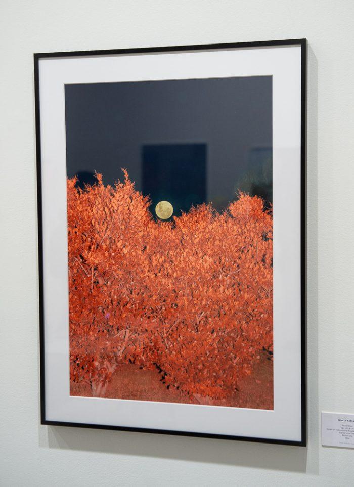 Monty Kaplan at Saatchi Gallery