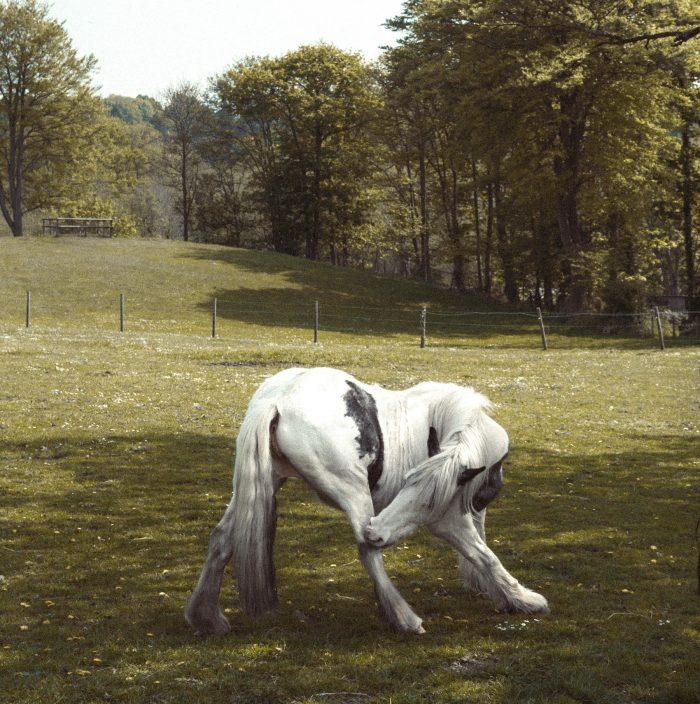 White Horse (s)