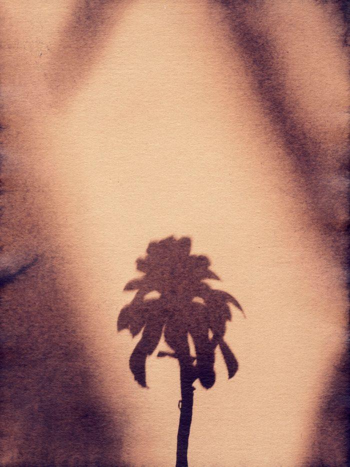 Little Palm III by Sayako Sugawara