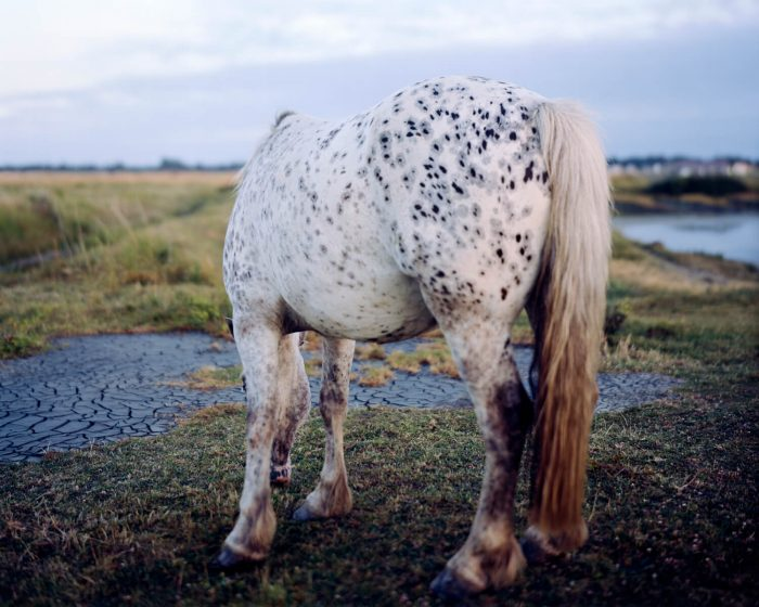 Robin Friend, Horse, New Forest, 2009 Archival Pigment Print 75 x 60inch © Robin Friend courtesy of Open Doors Gallery